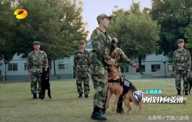 《奇兵神犬》训犬时被咬出一身伤的张馨予,这次真的有点圈粉啊!