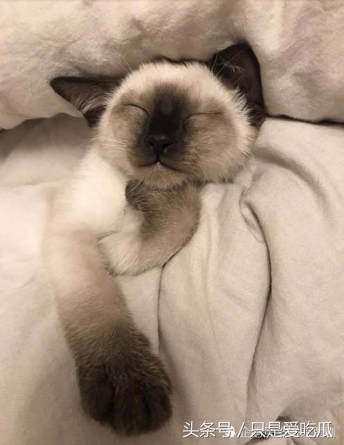 易烊千玺为流浪猫捐助猫粮,获赞善良又暖心
