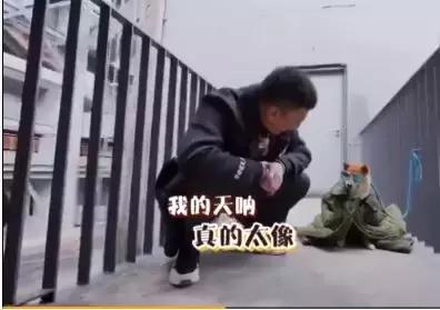 雷佳音又招惹岳云鹏,可能他需要一个郭京飞