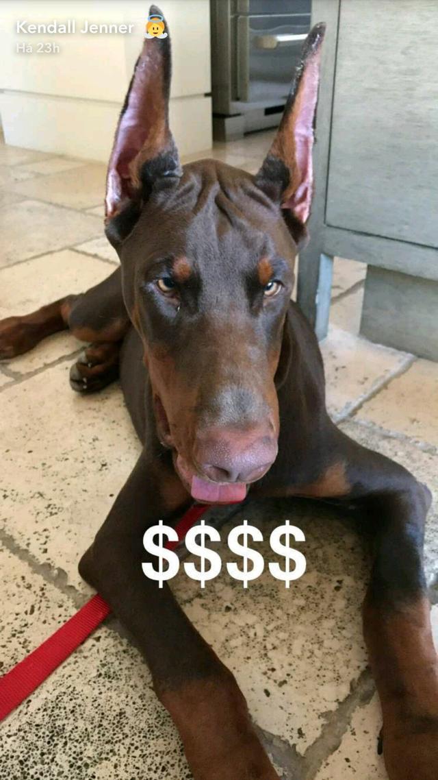 肯豆的杜宾犬咬伤小朋友,她的危机公关做得也太差劲了