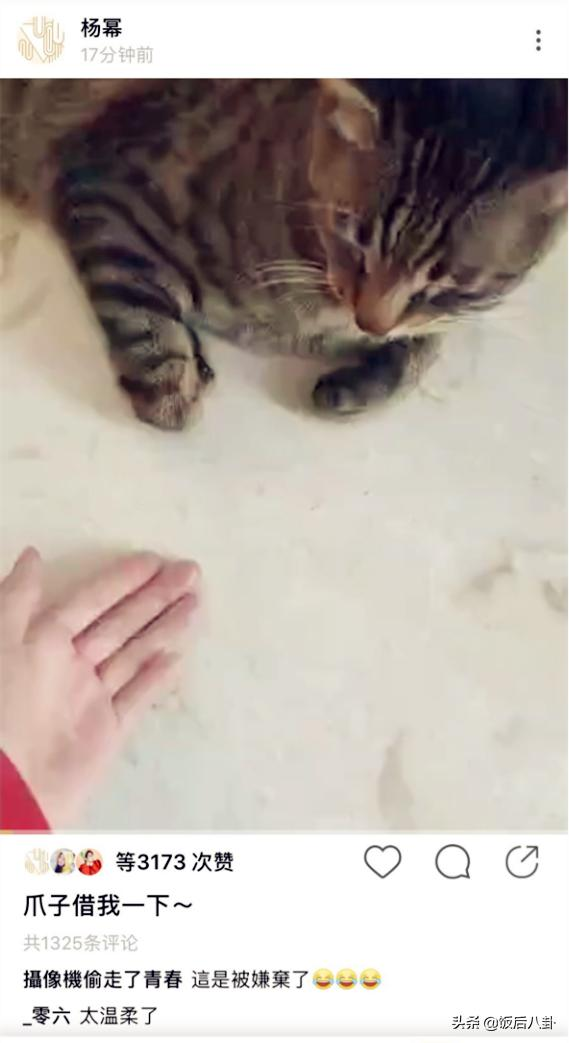 杨幂宅家逗猫修长手指抢镜,小猫咪被迫营业一脸无奈