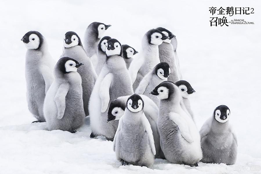 《帝企鵝日記2》睽違12年震撼回歸 江一燕暖心演唱推廣曲